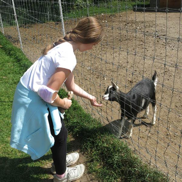 Mademoiselle nourrit une chèvre