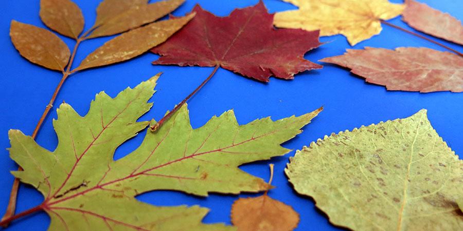 Gros plan sur feuilles d'automne