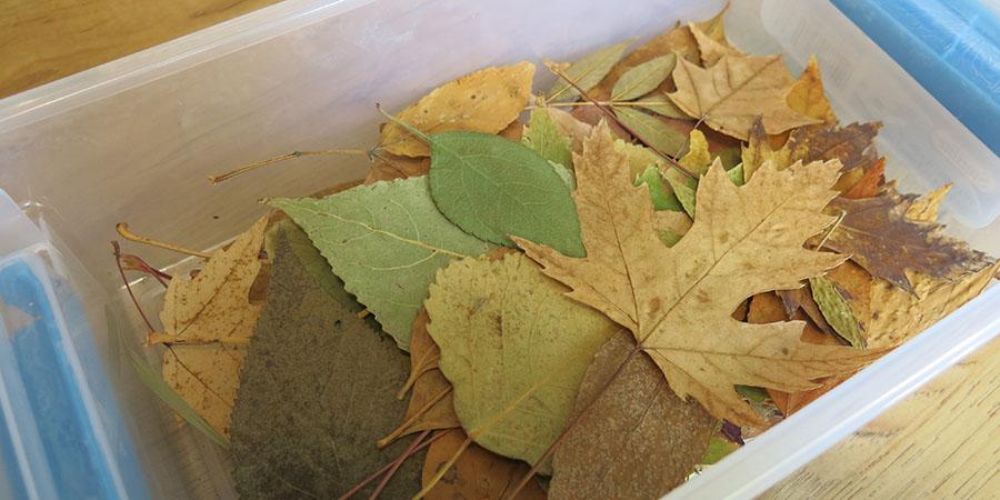 Feuilles d'automne séchées et prêtes à être utilisées