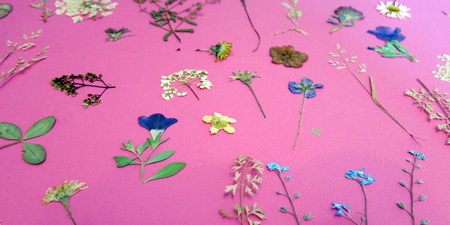 Fleurs séchées sur affiche en carton