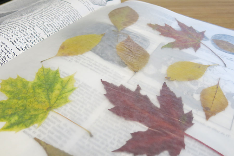 Conservation des feuilles d'automne (dans du papier ciré)