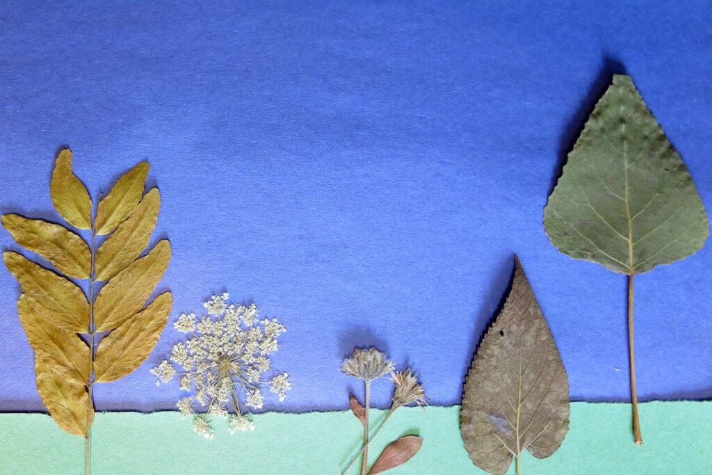 Montage de feuilles d'automne représentant une forêt